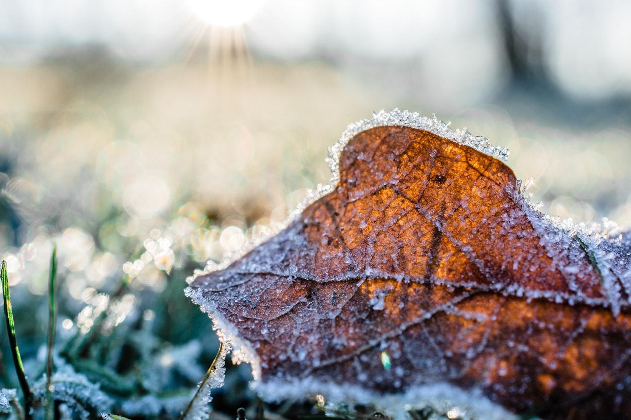 bevroren blad in de tuin